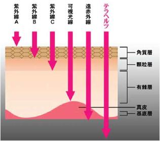 テラヘルツ波は体の深部まで透過する為、筋肉や神経への効果が高い。